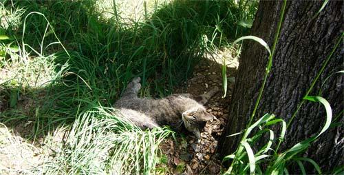 Кошка нежится под деревом