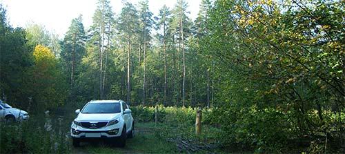 На полянке в лесу