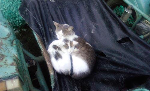 Кошка и котенком удобно разместились в люльке мотоцикла
