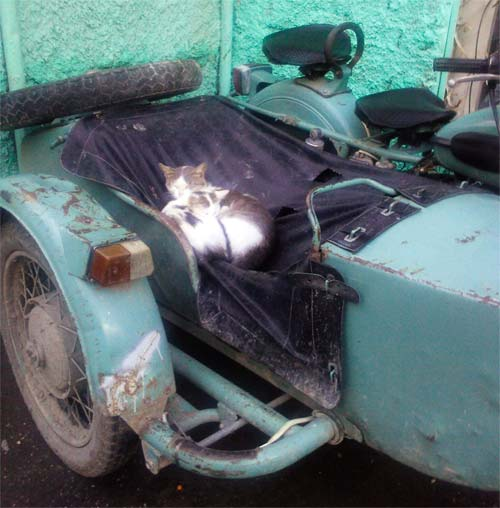 Кошка с котенком удобно разместилась в люльке мотоцикла