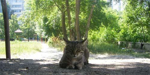 Кот, которого мы прозвали Тигром