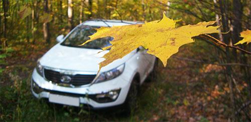 Осень в лесу, KIA Sportage 3