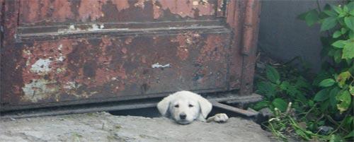 Щенок выглядывает из под гаража